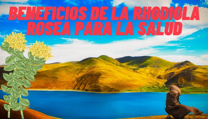 BENEFICIOS DE LA RHODIOLA ROSEA PARA LA SALUD